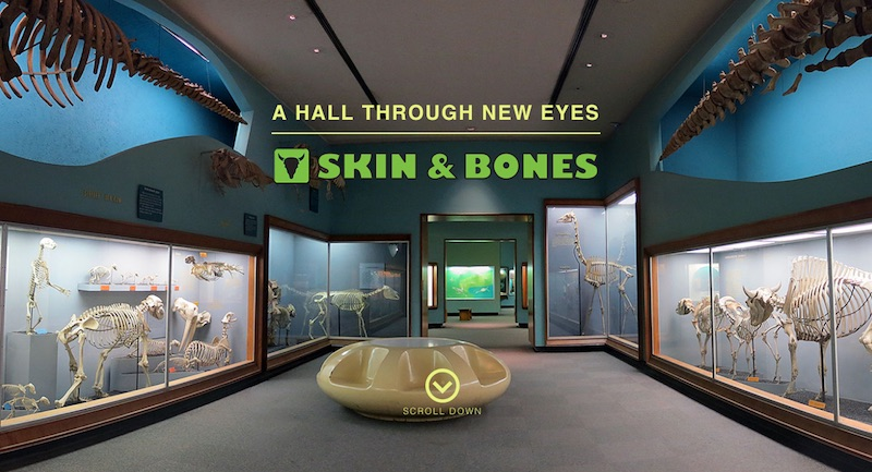 skin and bones exhibit hall website header