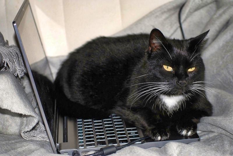 black cat sitting on laptop keyboard