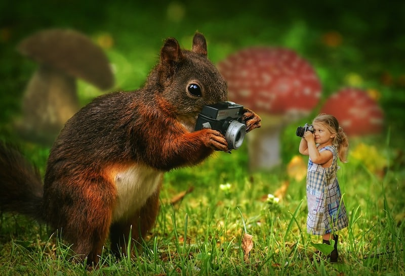Manipulated photo of a squirrel taking a photo of a miniature girl smaller than itself. The girl is pointing a camera at the squirrl